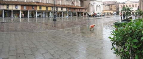 un cane solo